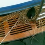 Blässhuhn verhindert Bootsfahrt